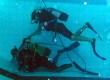 Galeria201307czyszczenie basenu13